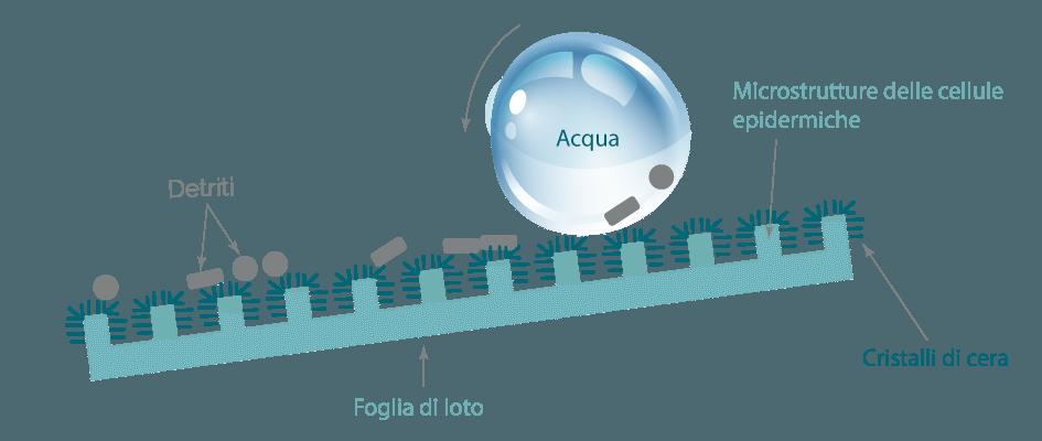 Effetto loto: superficie autopulente - Trattamento Nanotecnologico Carrozzeria
